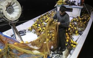 Karadenizde palamut bereketi
