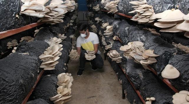 Genç girişimci kurduğu tesiste yılda 20 ton mantar üretiyor