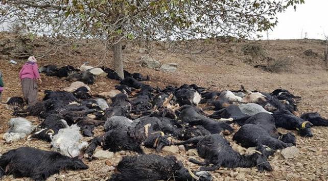 Adanada yıldırım isabet eden 81 keçi telef oldu