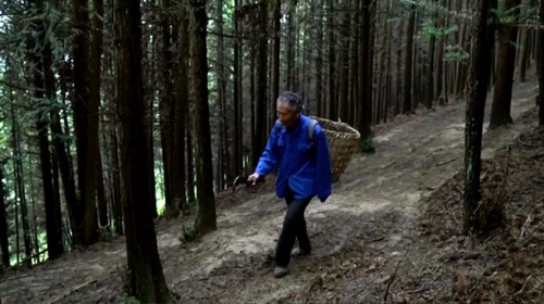 33 yılını ağaç dikmeye adadı, tek isteği gelecek nesillere yeşil bir dünya bırakmak