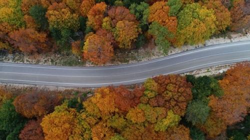 Sonbahar Uludağı rengarenk ağaçlarla süsledi