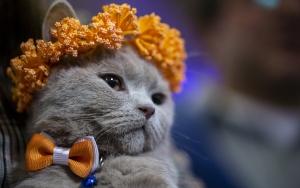 """Başkentte """"Kedi Güzellik Festivali"""" düzenlendi"""