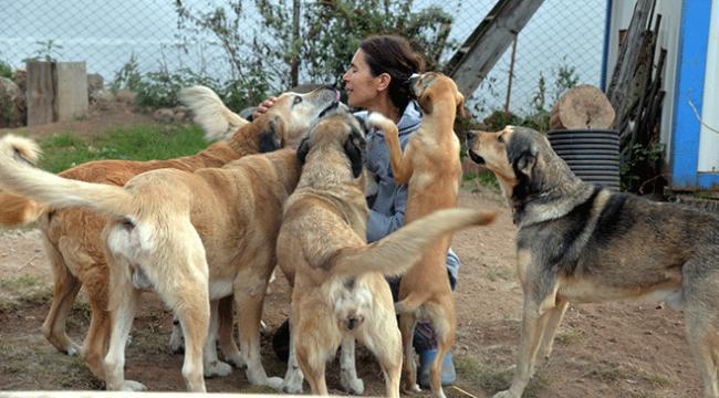 Emekli maaşının büyük bölümünü sokak köpekleri için harcıyor