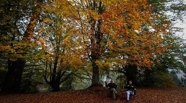 Türkiyenin dört bir yanından sonbahar manzaraları