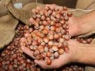 Tarım ve Orman Bakanı Bekir Pakdemirli'den fındık açıklaması