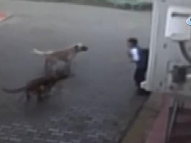 12 yaşındaki çocuk okul yolunda köpeklerin saldırısına uğradı