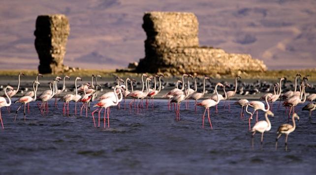 Van Gölü flamingolara ev sahipliği yapıyor