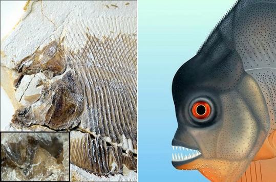 Almanya'da 150 milyon yıllık balık fosili bulundu