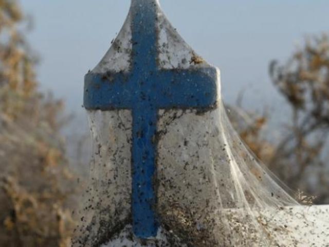 Yunanistanın Vistonida Gölü kıyıları örümcek ağıyla kaplandı