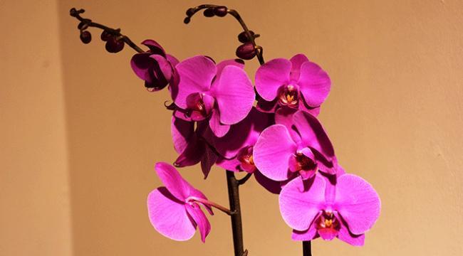 Marmarisin orkideleri ile biyoçeşitliliğe dikkat çekilecek