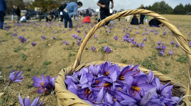 Karabükte 2nci Safran Festivali