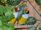Kuş sevgisi gelir kapısına dönüştü