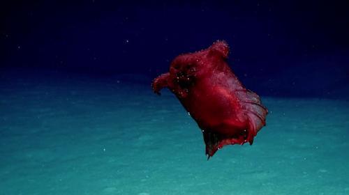"""""""Başsız tavuk deniz canavarı"""" Doğu Antarktikada görüntülendi"""
