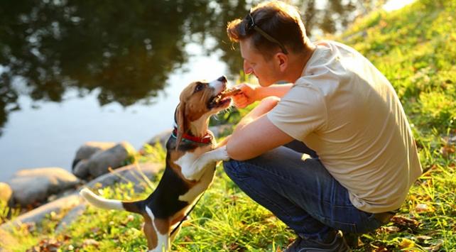 Köpeklerin kelimeleri nasıl anladığı araştırılıyor