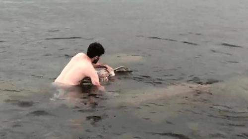 Orduda sahte balık yemeye çalışan martı son anda kurtarıldı