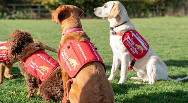 Araştırmalar köpeklerin sıtma parazitini tespit etmek için eğitilebileceğini gösteriyor