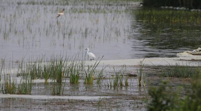 Kızılırmak Deltasındaki lagün göllerinde ava sınırlama