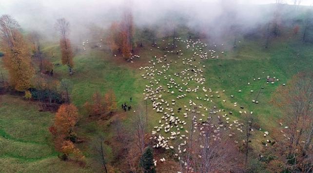 """""""Yayla kenti"""" Trabzon ziyaretçilerini doğal güzellikleriyle karşılıyor"""