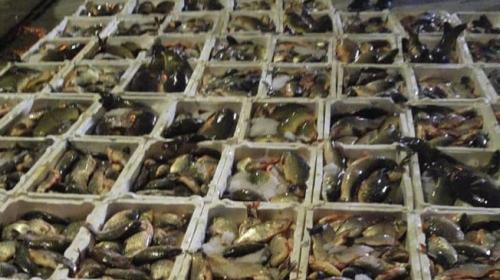 Çanakkale'de kaçak su ürünleri avcılarına ceza yağdı