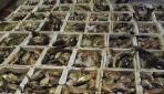 Çanakkalede kaçak su ürünleri avcılarına ceza yağdı
