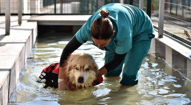 Yaralı sokak hayvanlarına masajlı ve havuzlu tedavi uygulanıyor