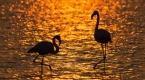 İzmir Kuş Cennetinde gün batımı