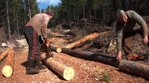 Torosların orman işçileri