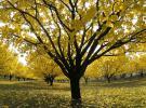 Iğdır'ın kayısı bahçelerinde kartpostallık görüntüler oluştu