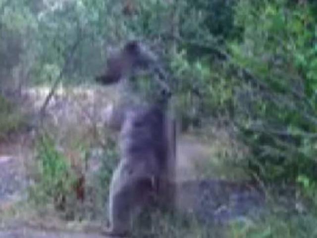 Erzincanda vahşi yaşam fotokapana yansıdı