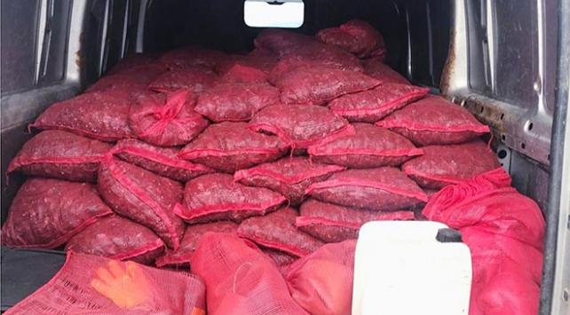 Bursada 2 ton kaçak midye ele geçirildi