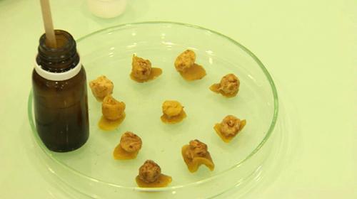 Arı kovanından gelen şifa: Propolis