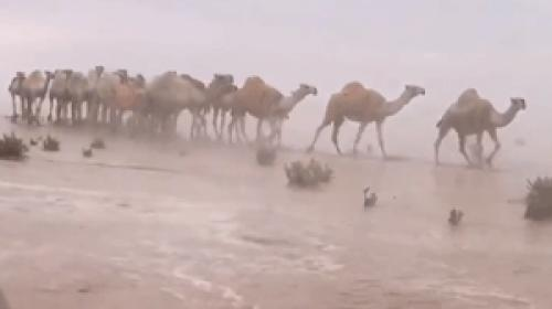 Suudi Arabistan ve Kuveytte şiddetli yağış ilginç görüntüler oluşturdu