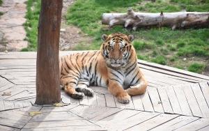 Gaziantep Hayvanat Bahçesinde ziyaretçi rekoru