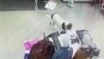 Sevimli köpek AVMden tişört çalarken kameralara yakalandı