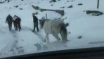 Yaylada terk edilen atlar donmak üzereyken bulundu