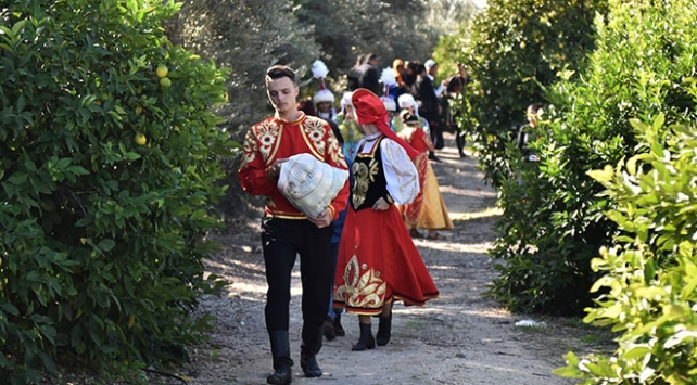 30 ülkeden geldiler, yöresel kıyafetleriyle narenciye topladılar