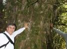 Kahramanmaraş'ta 2 bin 800 yıllık porsuk ağacı korumaya alınıyor