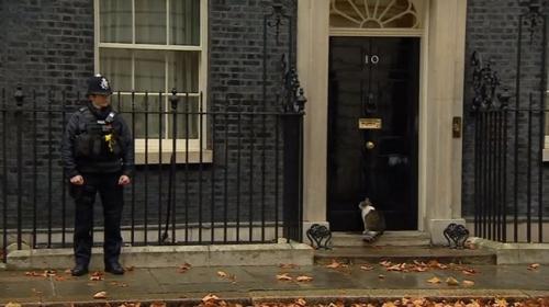 İngiltere Başbakanlığı kedisi yağmurda kaldı, imdadına polis yetişti