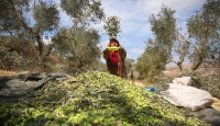 Filistinlilerin en büyük geçim kaynağı tehdit altında