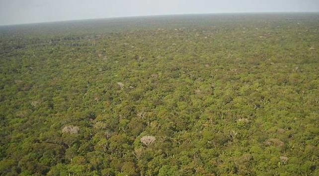 Amazon ormanlarında son 10 yılın en büyük kaybı