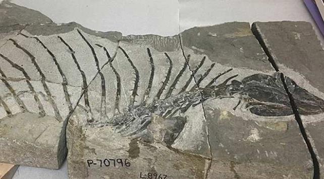 ABDde 300 milyon yıllık otobur sürüngen fosili bulundu
