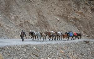 Besici Kayanın kara yolundaki yolculuğu