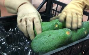 Romanyaya avokado ihracatı