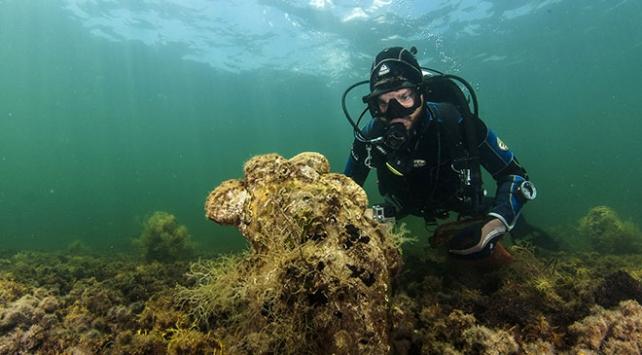 Gizemli parazit Akdenizdeki yumuşakçaları yok ediyor