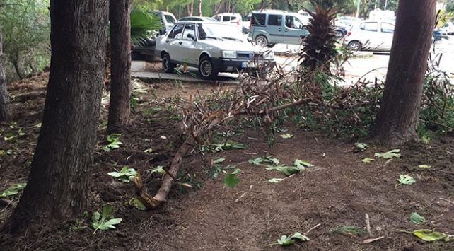Muğlada şiddetli fırtına ağaç dalını kopardı: 1 yaralı