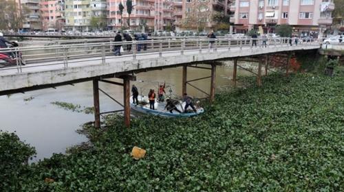 Asi Nehri üzerindeki su sümbülleri temizleniyor