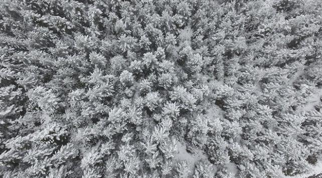 """Kastamonu ormanlarında """"beyaz örtü""""nün eşsiz güzelliği"""