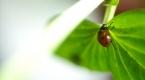 """Böcekler EXPO 2023e """"uğur"""" getirecek"""