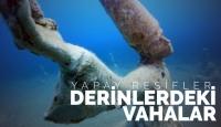Derinlerdeki Vahalar: Yapay Resifler