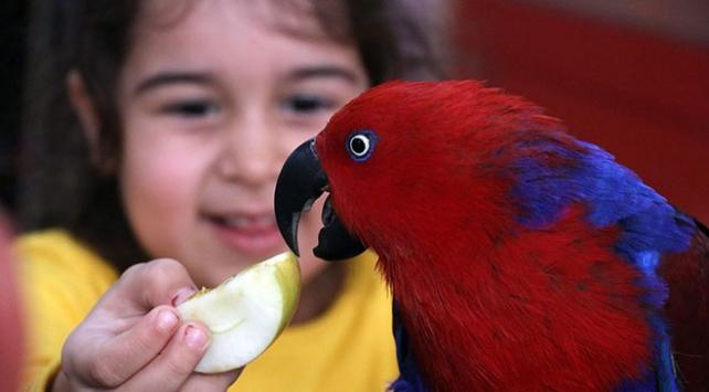 Aydının çocuklara hayvan sevgisi aşılayan kuşlarla dolu ilkokulu